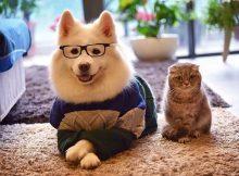 ảnh chó mèo đẹp cover