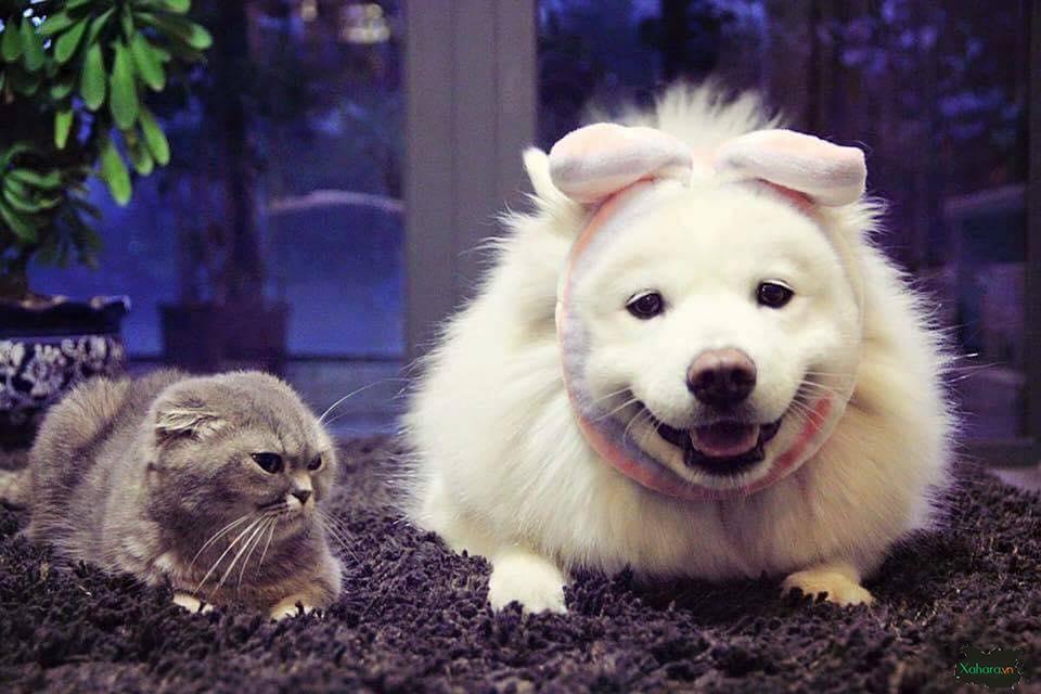ảnh chó mèo đẹp nhất