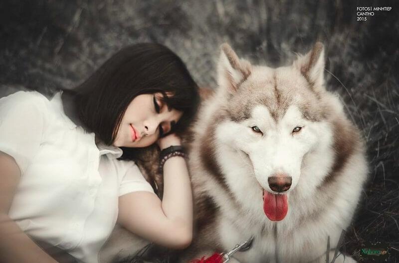 ảnh chụp chó husky