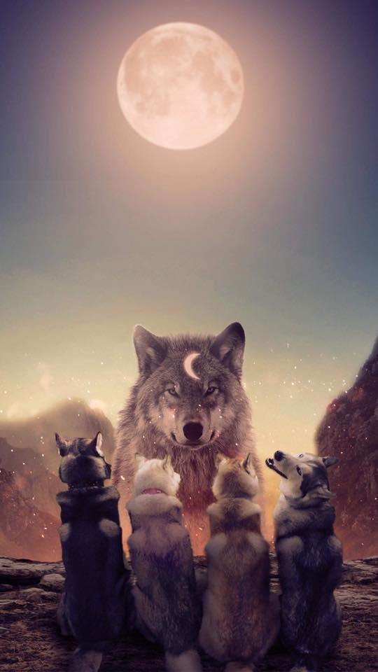ảnh nền điện thoại chó Husky