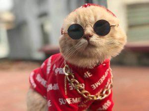 Những món đồ thời trang sành điệu dành riêng cho chó mèo