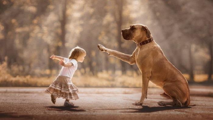 Chó luôn cố gắng làm chủ nhân vui và hài lòng