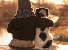 Chó là bạn thân thiết của con người