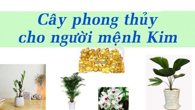 Người mệnh Kim nên trồng cây gì trong nhà thì hợp?