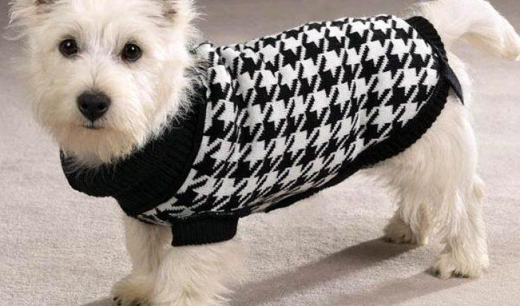 mặc áo cho chó