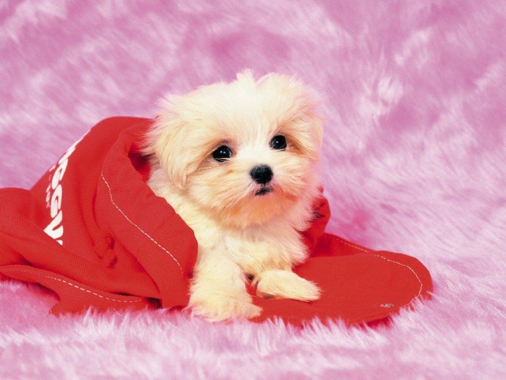giữ ấm cho chó vào mùa đông
