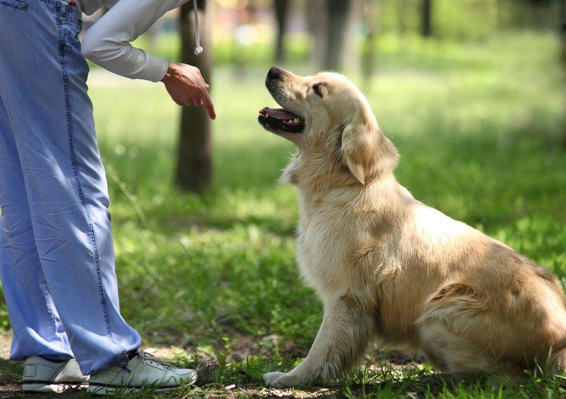 dạy chó bằng cử chỉ