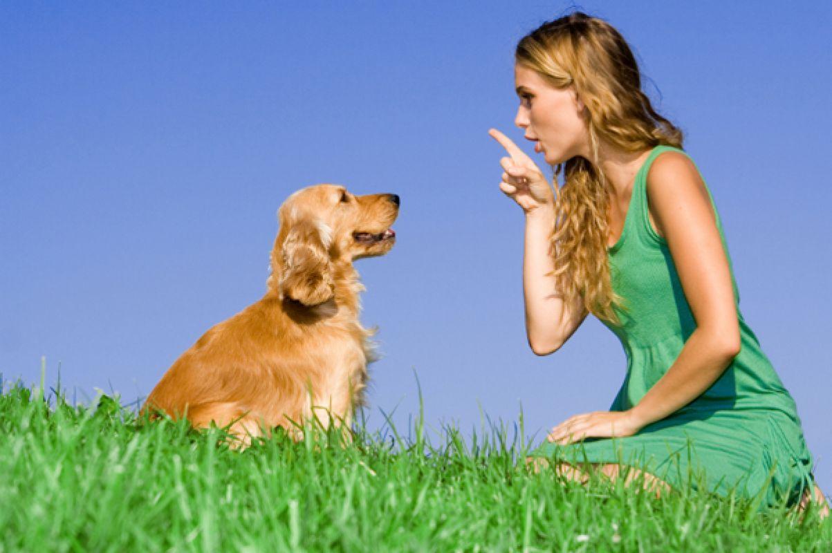 Cách huấn luyện chó con biết nghe lời, ăn, ngủ, vệ sinh đúng chỗ