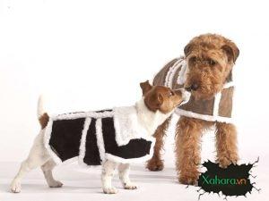 Hướng dẫn chọn mua quần áo cho chó mèo