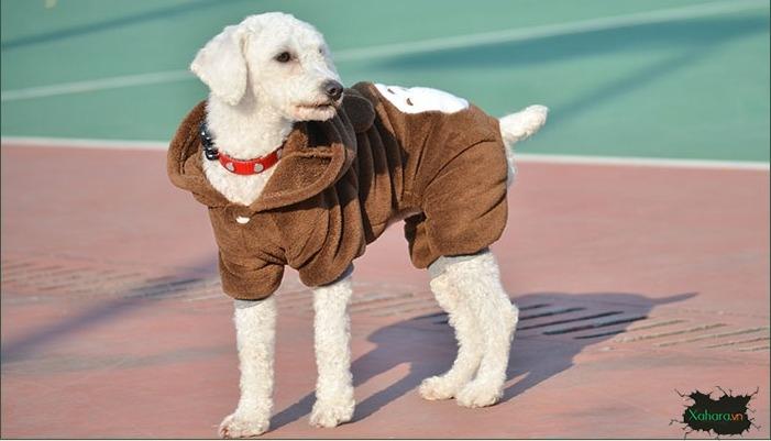 áo ấm cho chó