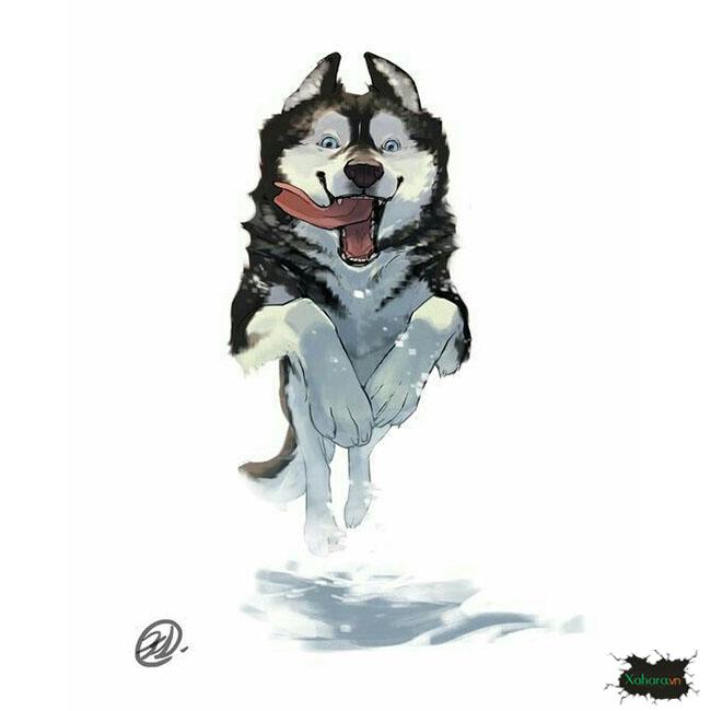 Bộ sưu tập tranh, hình vẽ chó Husky đẹp, cute